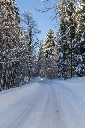 Shades Of Winter Slovenia Slovenia Scapes Bare Tree Beauty In Nature Cold Temperature Day Landscape Nature No People Outdoors Road Scenics Sky Snow The Way Forward Tire Track Tranquil Scene Tranquility Transportation Tree Winter