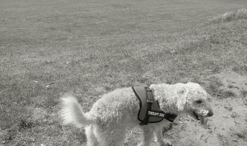 Woolie Dog Pets