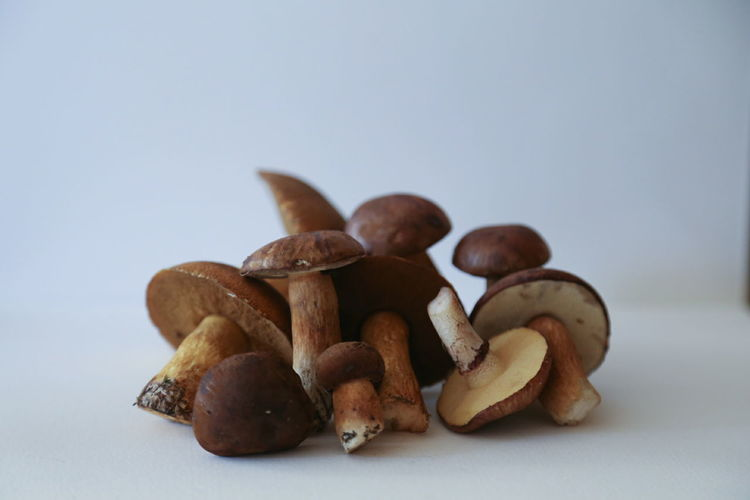 Bay boletes and yellow boletes in white background Podgrzybek Food And Drink Food Healthy Eating Freshness Mushroom Hunting Mushrooms Mushroomphotography Close-up Autumn Collection Autumn Foraging Autumn Melancholy Isolated White Background Food Gourmet Food Photography Isolated Mushrooms White Background Boletes Bay Bolete Yellow Boletus Stories From The City