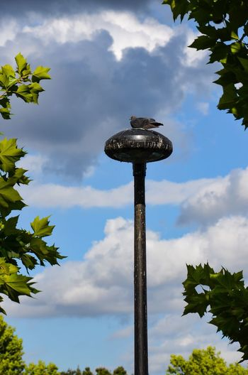 Best Spot in Town Low Angle View Sky Cloud - Sky Day No People Outdoors Nature Leaf Tree Beauty In Nature Perching Animal Themes Pigeon Canada Water London Postcode Postcards
