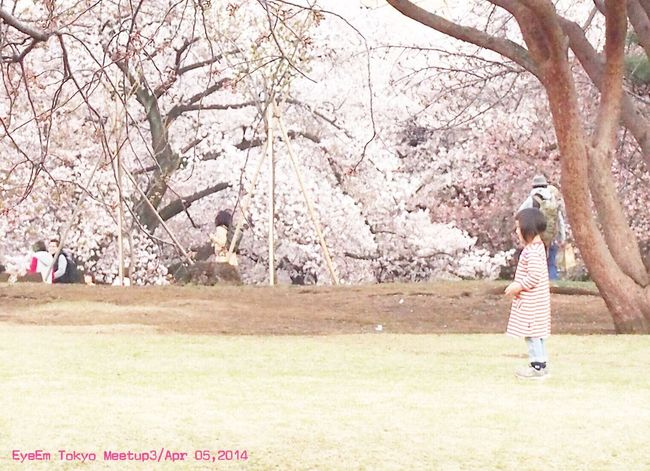 EyeEm Tokyo Meetup 3 Cherry Blossoms Playing