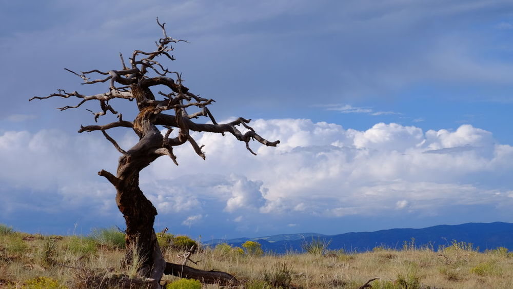 Beauty In Nature Branch Cloud - Sky Day Dead Tree Landscape Low Angle View Nature No People Outdoors Sky Tranquility Tree