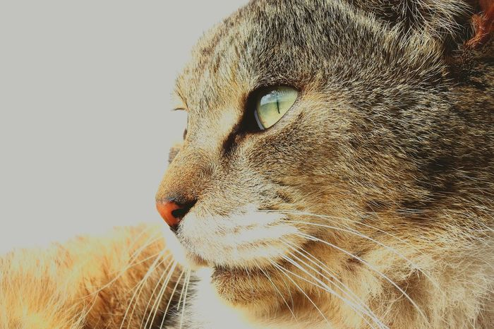 FACE nyanco Catsagram Cats Cat Lovers Cat Photography Cat