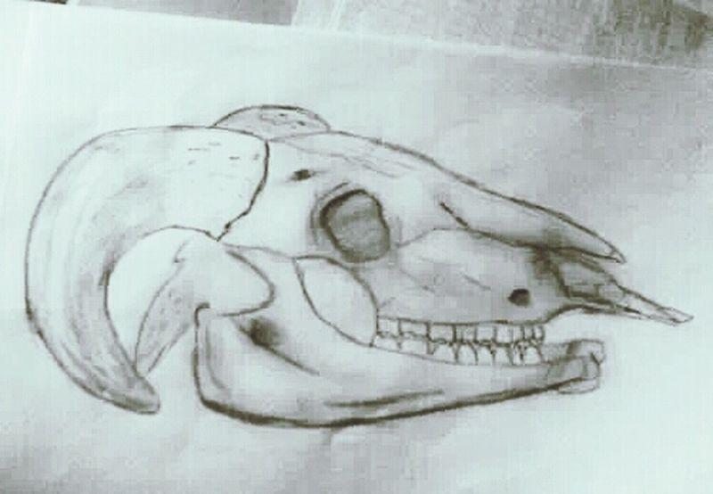 My Drawing Art, Drawing, Creativity Pencil Drawing Charcoal Drawingsheep skull /charcoal 2013