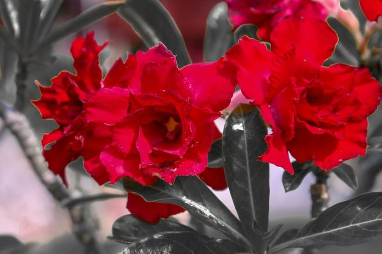 Red Flower Red