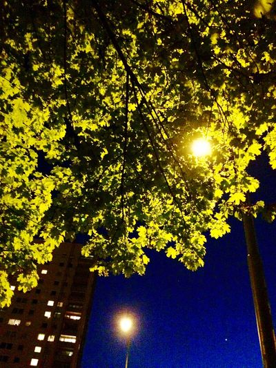 A heartbroken night view Evening Night Night Lights Trees Sky Walking Around Building Heartbroken