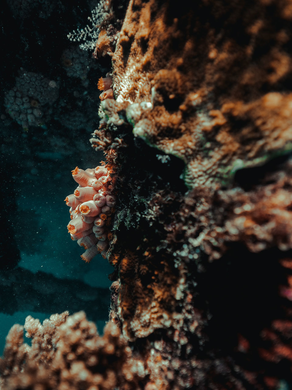 underwater, undersea, sea life, animals in the wild, sea, marine, coral, animal wildlife, invertebrate, animal themes, close-up, water, animal, no people, nature, one animal, outdoors, fish, beauty in nature, ecosystem