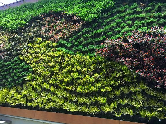 Planting on the wall Wall Architecture Architecture_collection Architectural Detail City City Planning Plant Plants Plants And Flowers Plants 🌱 Planting Plant Life Plantography Plant Photography Plantation Green Green Color Green Leaves Flower Flowers Of The Wall Planting On The Wall Turkey Türkiye Istanbul Istanbul Turkey