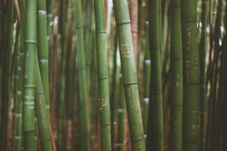 Full frame shot of bamboo plants in forest