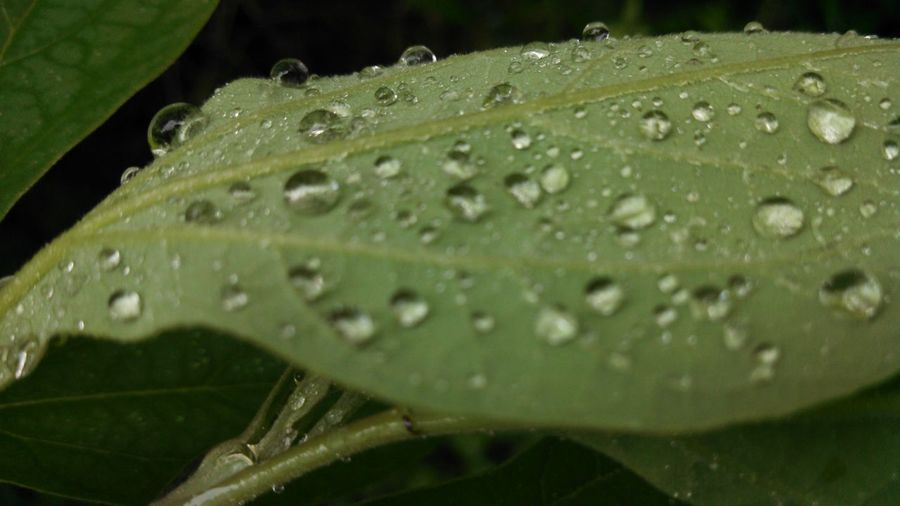 After The Rain Leaf Water Droplets The Purist (no Edit, No Filter)