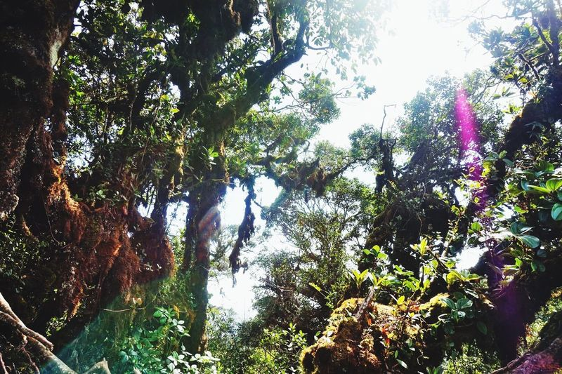 Malaysia Jungle Sunlight Sunrays