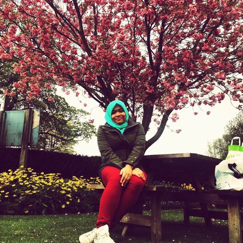 Cherry Blossoms at BoltonAbbey