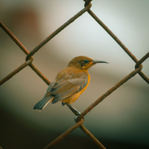 Close-up of bird perching on metal fence