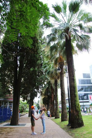 People walking on palm trees in city