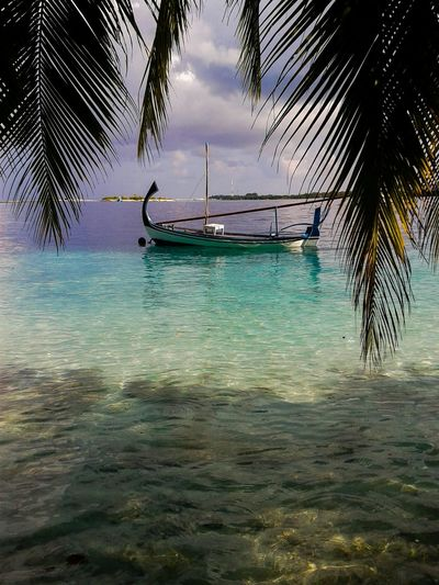 Maldives Maldives Islands Maldives Resorts Dhoni Beautiful Surroundings Holiday Relaxing Palm Trees Natural Beauty! Transportation Sea Palm Tree Water Beach Nature Sky Beauty In Nature Tranquility Nautical Vessel Outdoors Tree Scenics Day No People Horizon Over Water