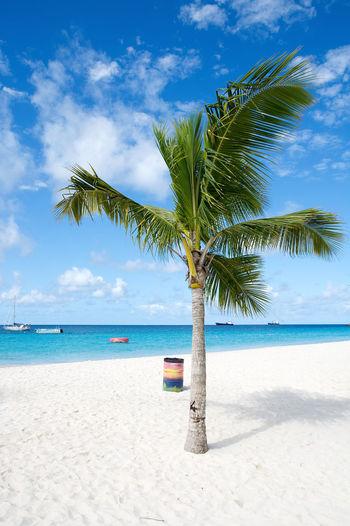 Palm tree on beach against blue sky