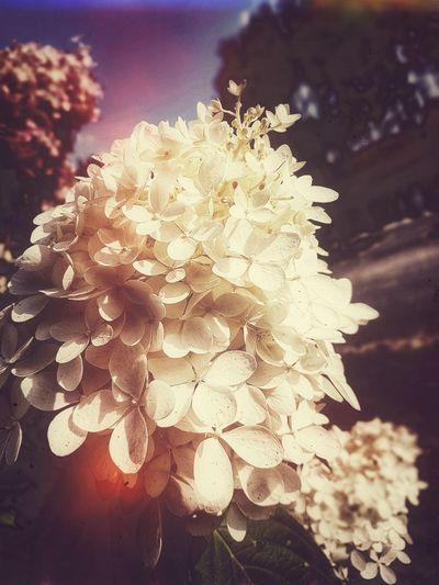 Beauty White