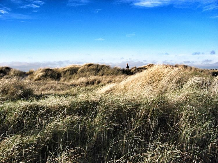 Dollymount strand Dunes Grass Grassy Landscape Nature Outdoors Overgrown Tranquil Scene Unrecognizable Person Windy
