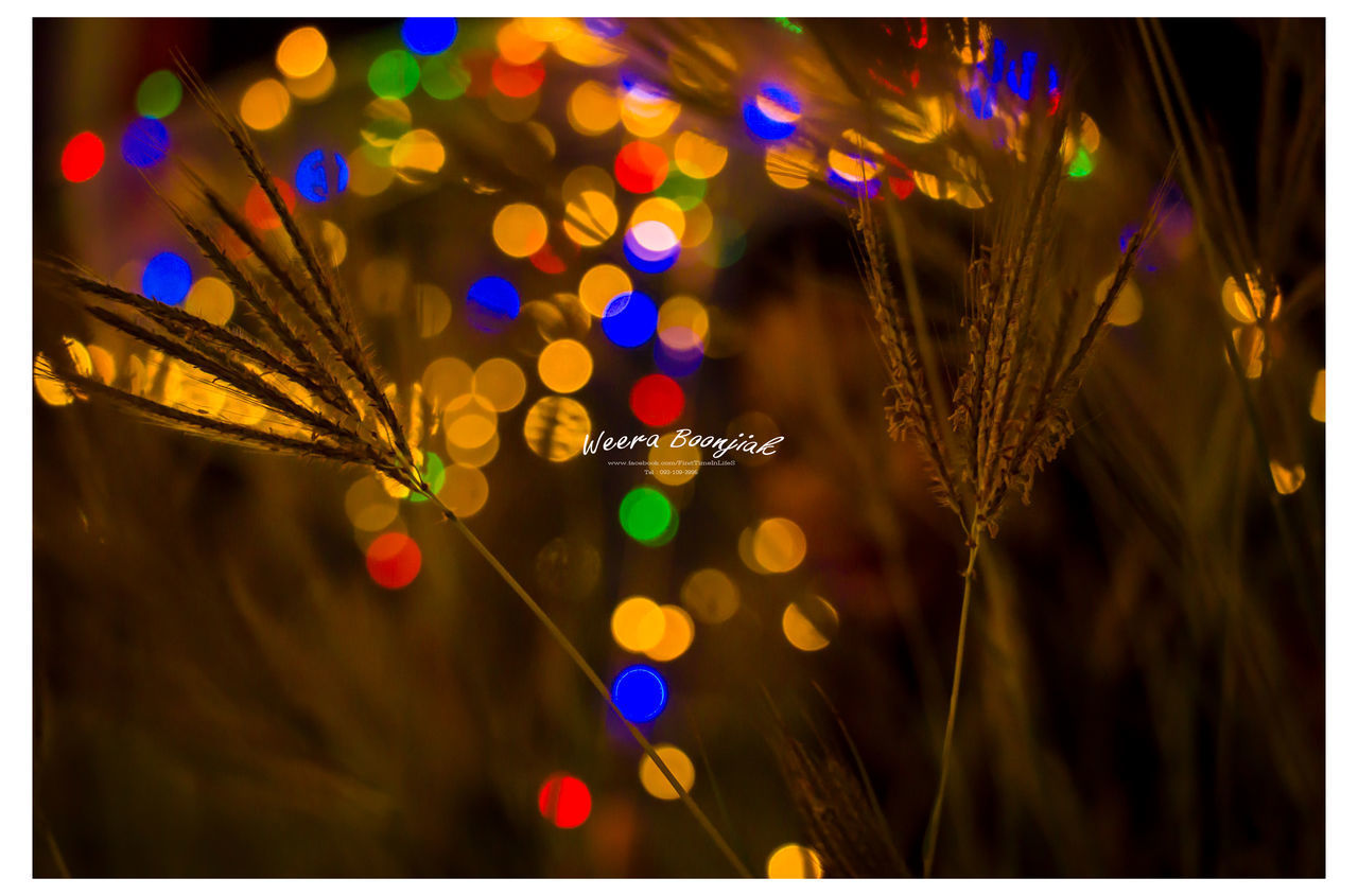 illuminated, night, auto post production filter, focus on foreground, transfer print, close-up, plant, celebration, no people, lighting equipment, decoration, glowing, nature, outdoors, selective focus, light - natural phenomenon, light, growth, motion