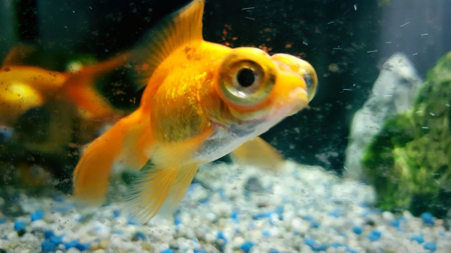Fish EyeEm Big Eyes Colors Underwater Aquarium Life Eyem Best Shots