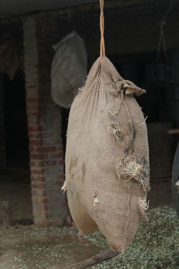 Hanging Out Village Life Animal Food SastaFotu Bharat India