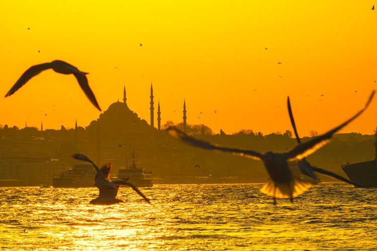 Seagulls flying over sea against orange sky