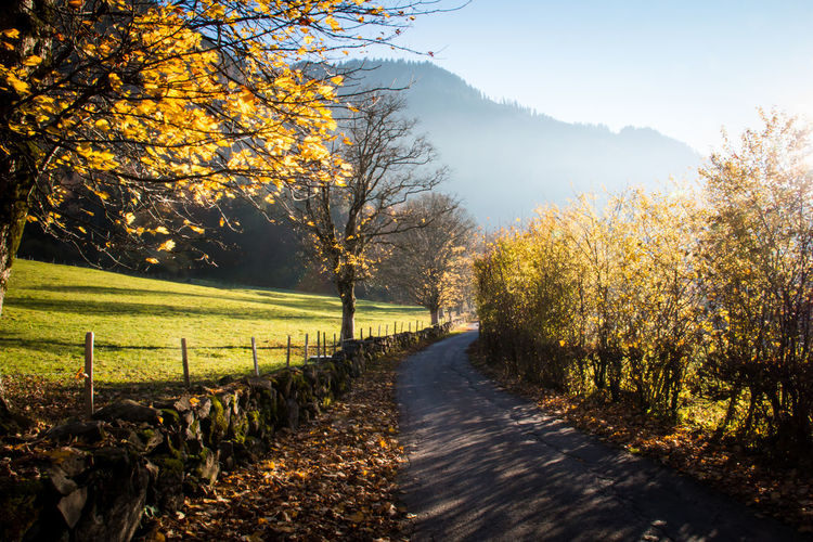 Auf dem Abendweg Abend Autumn Autumn Colors Beauty In Nature Berner Oberland Enjoy The Silence Evening Herbst Herbststimmung Nature Ruhe Sonne Sunset_collection The Way Forward Tranquil Scene Tranquility