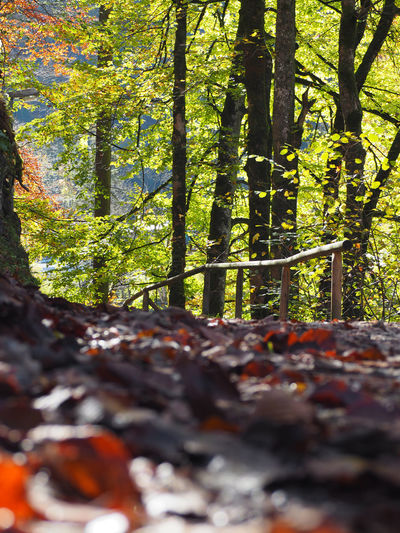 Autumn Beauty In Nature Branch Close-up Day Forest Growth Leaf Nature No People Outdoors Scenics Tranquility Tree Tree Trunk