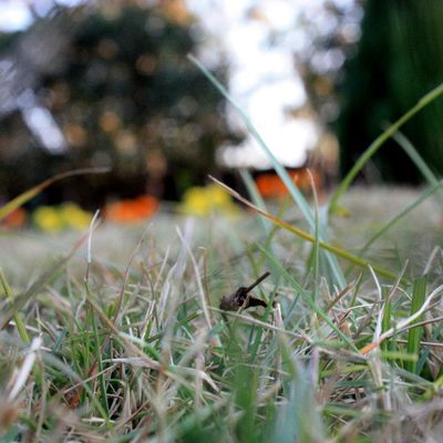 Canoneos450D Green Grass Nature Irfan