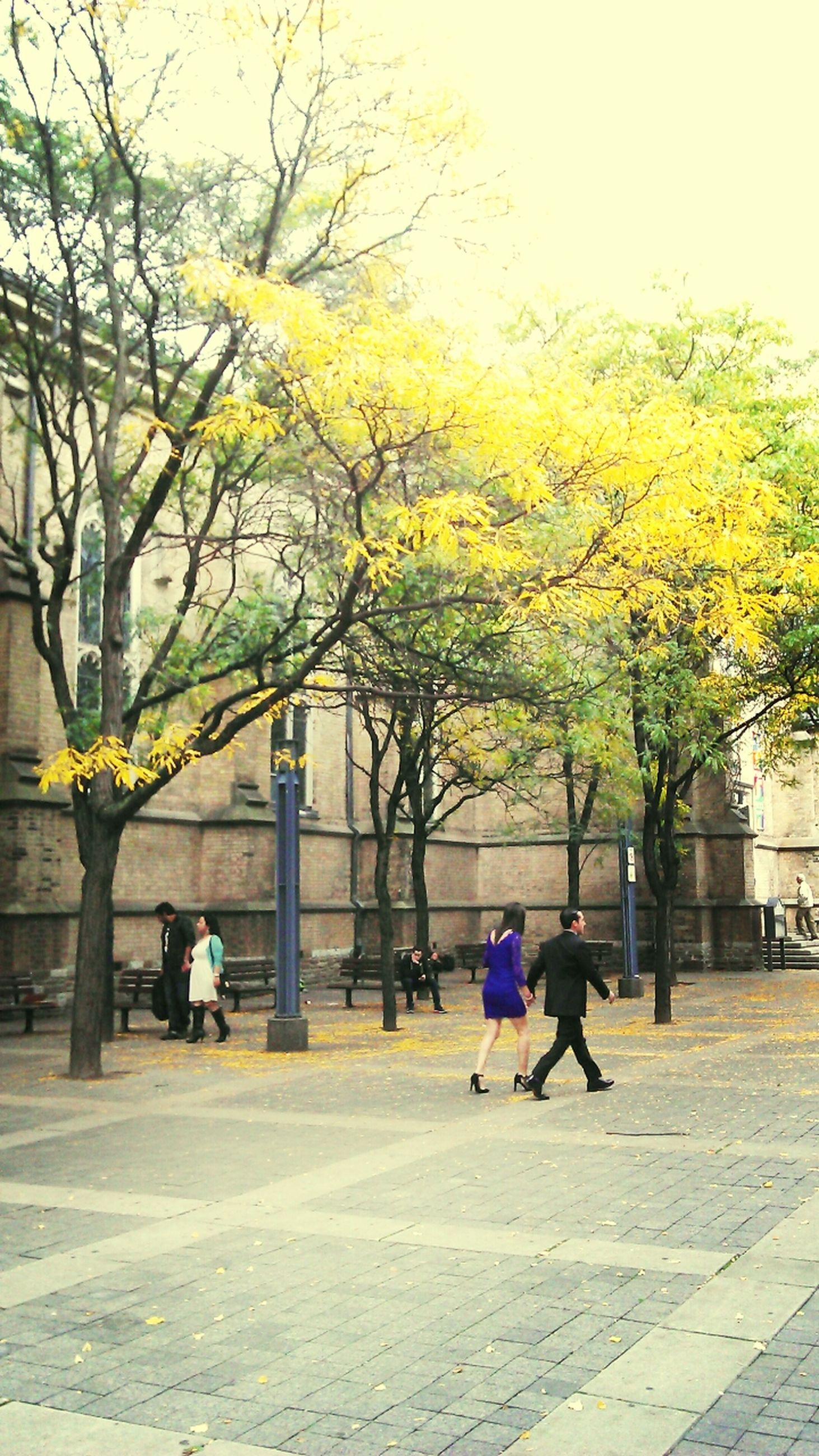 tree, lifestyles, men, full length, leisure activity, rear view, person, walking, autumn, park - man made space, built structure, togetherness, change, branch, childhood, building exterior, architecture, city