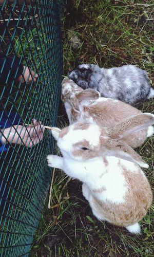 Animal Love Animals Rabbits Taking Photos