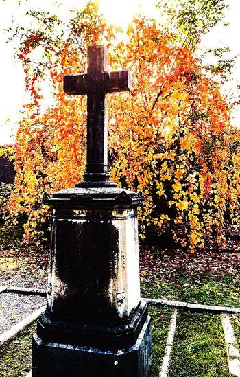 Tree No People ricordare.