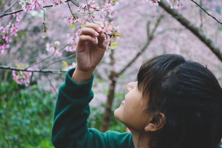 Portrait of girl holding cherry blossom
