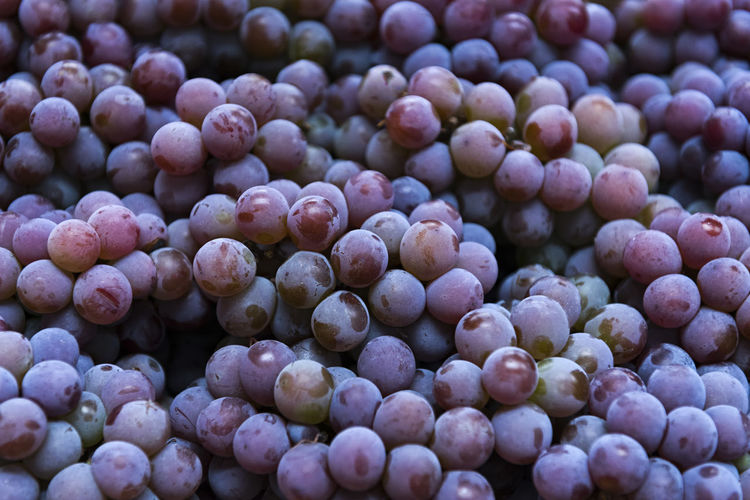 Purple grapes Vitis labrusca (or fox grape) Fruit Organic Agriculture Purple Close-up Freshness Healthy Eating Food Background Purple Grapes Purple Grape Juicy Sweet Ripe Diet Delicious Natural Tasty Vitamin C Grape Grapes Harvest Agriculture Abundance Fresh