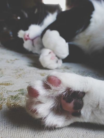 Cat Domestic Cat Pets Animal Themes One Animal Domestic Animals Mammal No People Relaxation Indoors  Close-up Day Sleeping