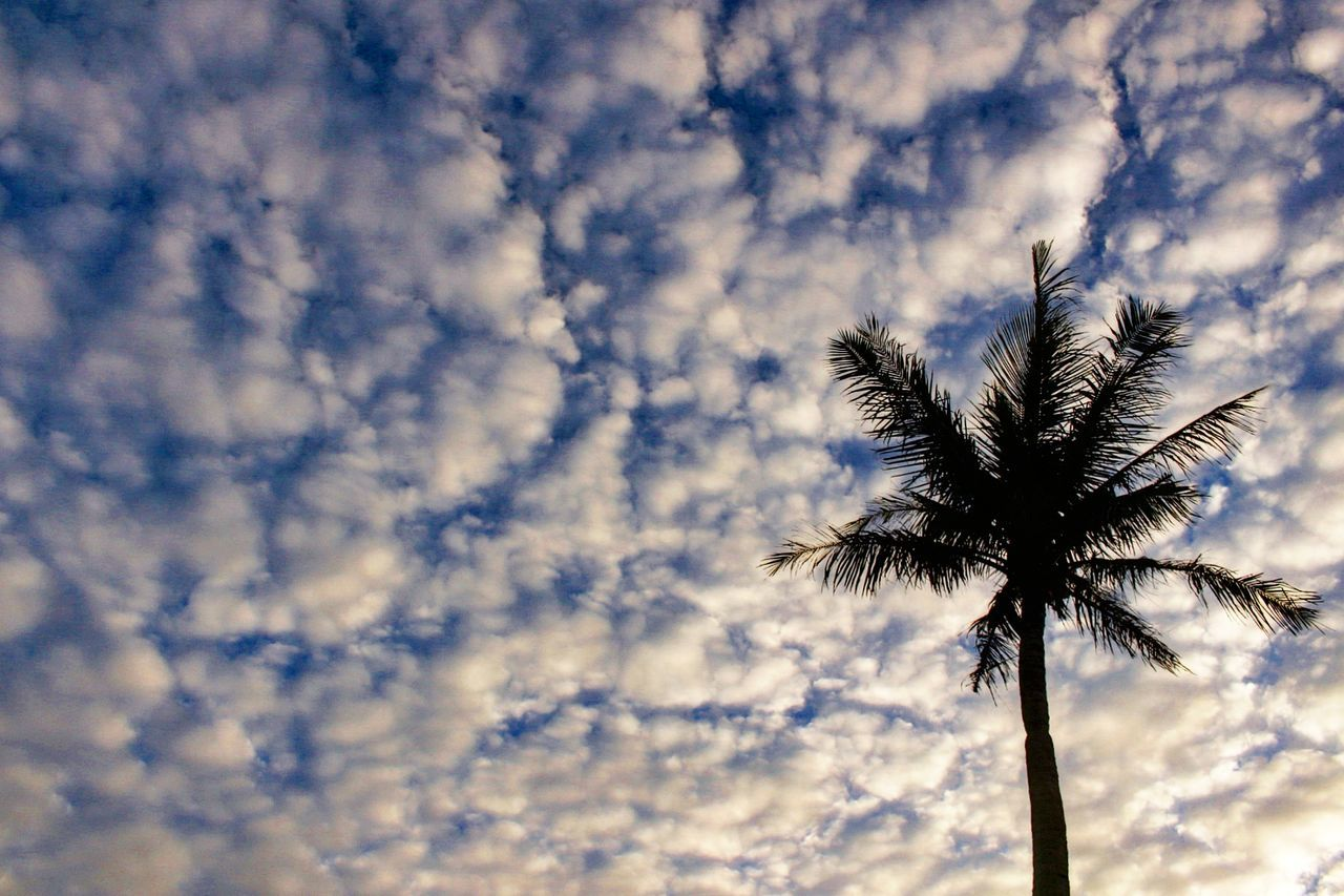 low angle view, nature, beauty in nature, outdoors, tree, day, palm tree, sky, tree trunk, no people, tranquility