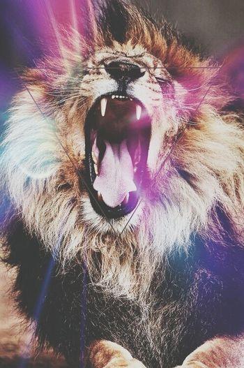No sleep ☁ Lion Hipster Pic Loveit