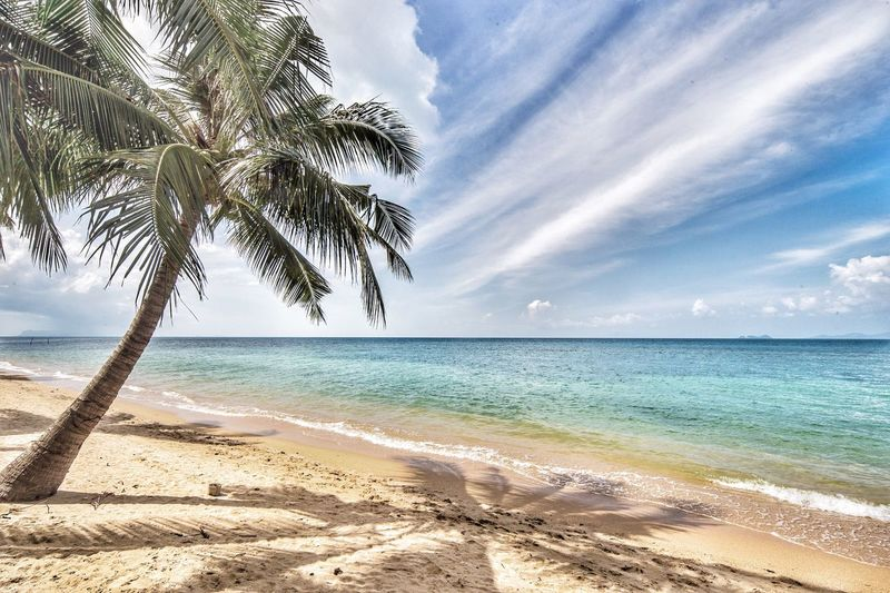 EyeEm Selects Sea Beach Sand Palm Tree Horizon Over Water Scenics Water Sky Beauty In Nature Cloud - Sky Nature Tranquil Scene Tree Tranquility Day Vacations Wave No People Outdoors Travel Destinations Ko Samui Koh Samui Thailand Ko Samui Thailand