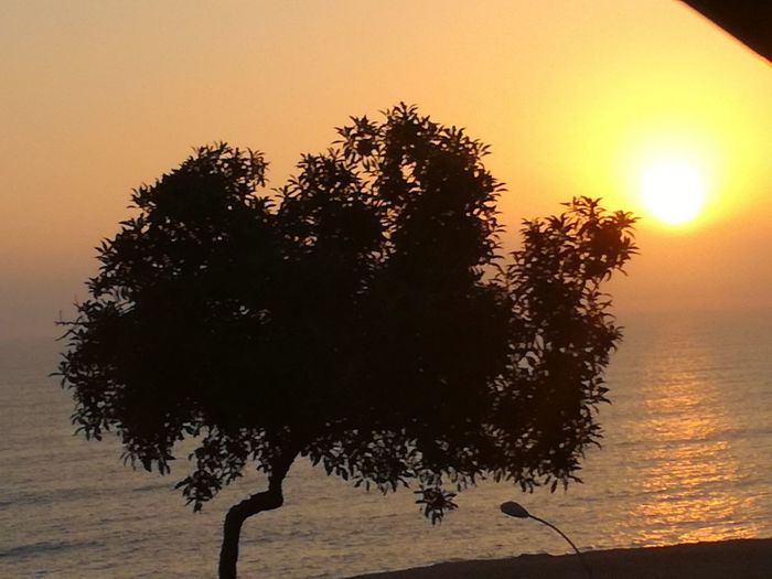 Sunset Tree Silhouette Beauty In Nature Horizon Over Water