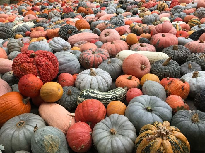 you want a pumpkin? Full Frame Food And Drink Healthy Eating Food Abundance Large Group Of Objects Backgrounds Pumpkin Multi Colored