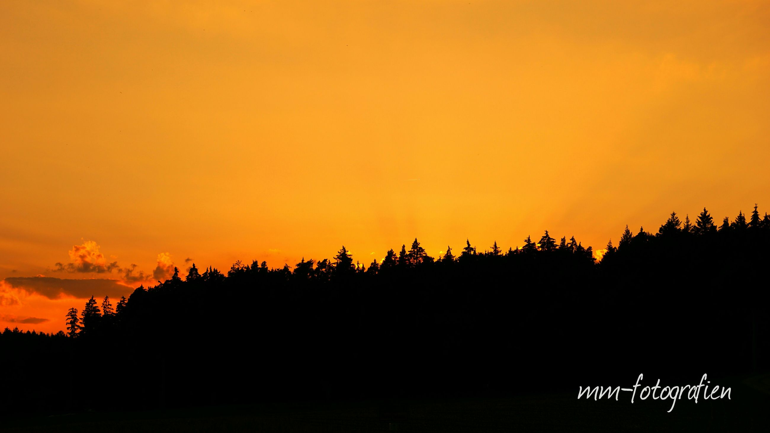 sunset, silhouette, copy space, orange color, beauty in nature, clear sky, scenics, tranquil scene, tranquility, nature, idyllic, tree, sky, growth, outdoors, landscape, no people, dusk, outline, dark