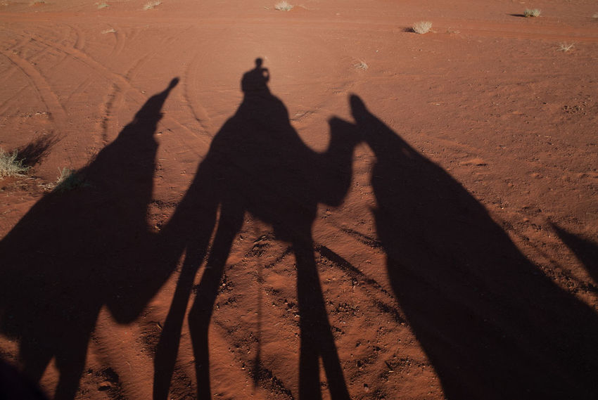 Shadow of people on camels on camel trek in Wadi Rum Trekking Adventure Arid Climate Camel Camel Trek Camel Trekking Camels Day Desert Domestic Animals Focus On Shadow Nature Outdoors Real People Sand Sand Dune Shadow Silhouette Standing Sunlight Togetherness