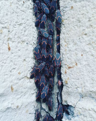 Close-up of multi colored hanging on wall