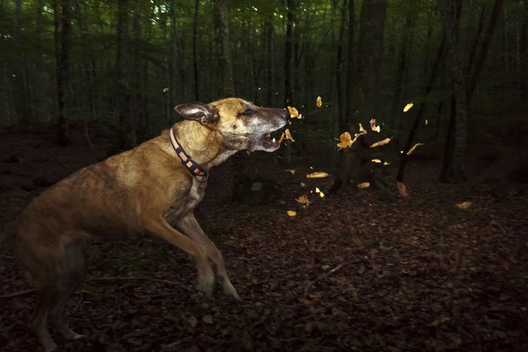 Dog standing on land in forest