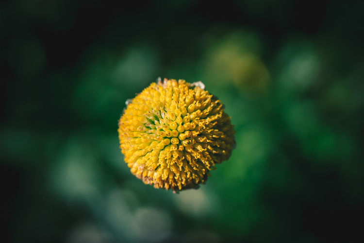 Close Up of a Yellow Flower Center Green Color Nature Plant Yellow Flower Abstract Beauty In Nature Blooming Close-up Day Flower Flower Head Focus On Foreground Fragility Freshness Growth Macro Nature No People Outdoors Petal Plant Sony A6000 Wallpaper Wildlife Yellow