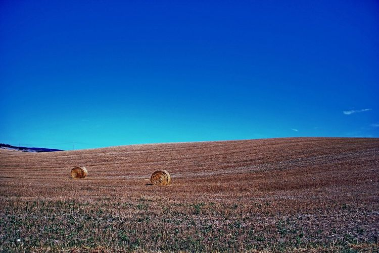 Pienza Italy Agriculture Animal Themes Bale  Beauty In Nature Blue Clear Sky Copy Space Day Farm Field Grass Hay Hay Bale Landscape Mammal Nature No People Outdoors Rural Scene Scenics Sky Tranquil Scene Tranquility
