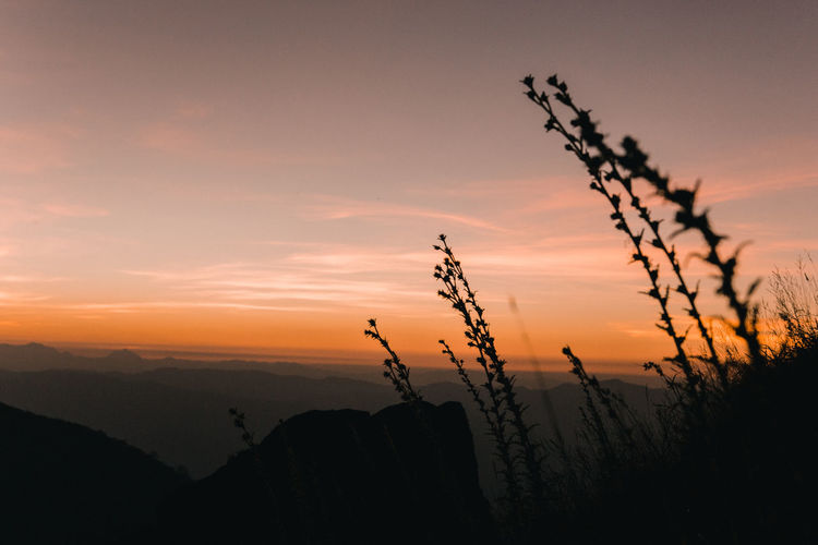 Silhouette plants growing on land against sky during sunset