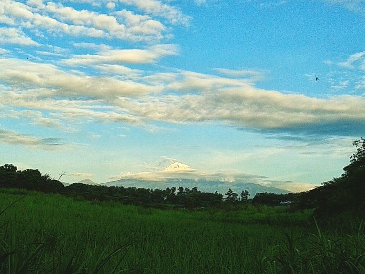 A perfect day in Córdoba EyeEm Nature Lover Green Grass Sky And Clouds Blue Heaven Tree Silhouette White Clouds Awesome Life Of A Biologist