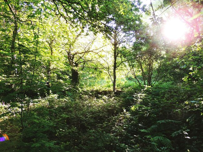 Forest Forest Photography Forestscene Sunlight Sun Background Sun Peeking Through The Trees Trees Leaves Tranquil Scene Remote Overgrown Overgrown And Beautiful Greenery Nature Nature Trail Naturetrail