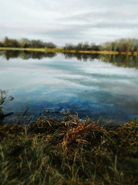Thin Ice Water Lake Nature Reed - Grass Family No People Floating On Water Outdoors Day Tranquility Marsh Plant Grass Sky Sunny Morning Hello World ✌ Smartphone Photos Smartphone Photographer Smartphone Photography Smartphonephotography Smartphonegraphy My Year My View